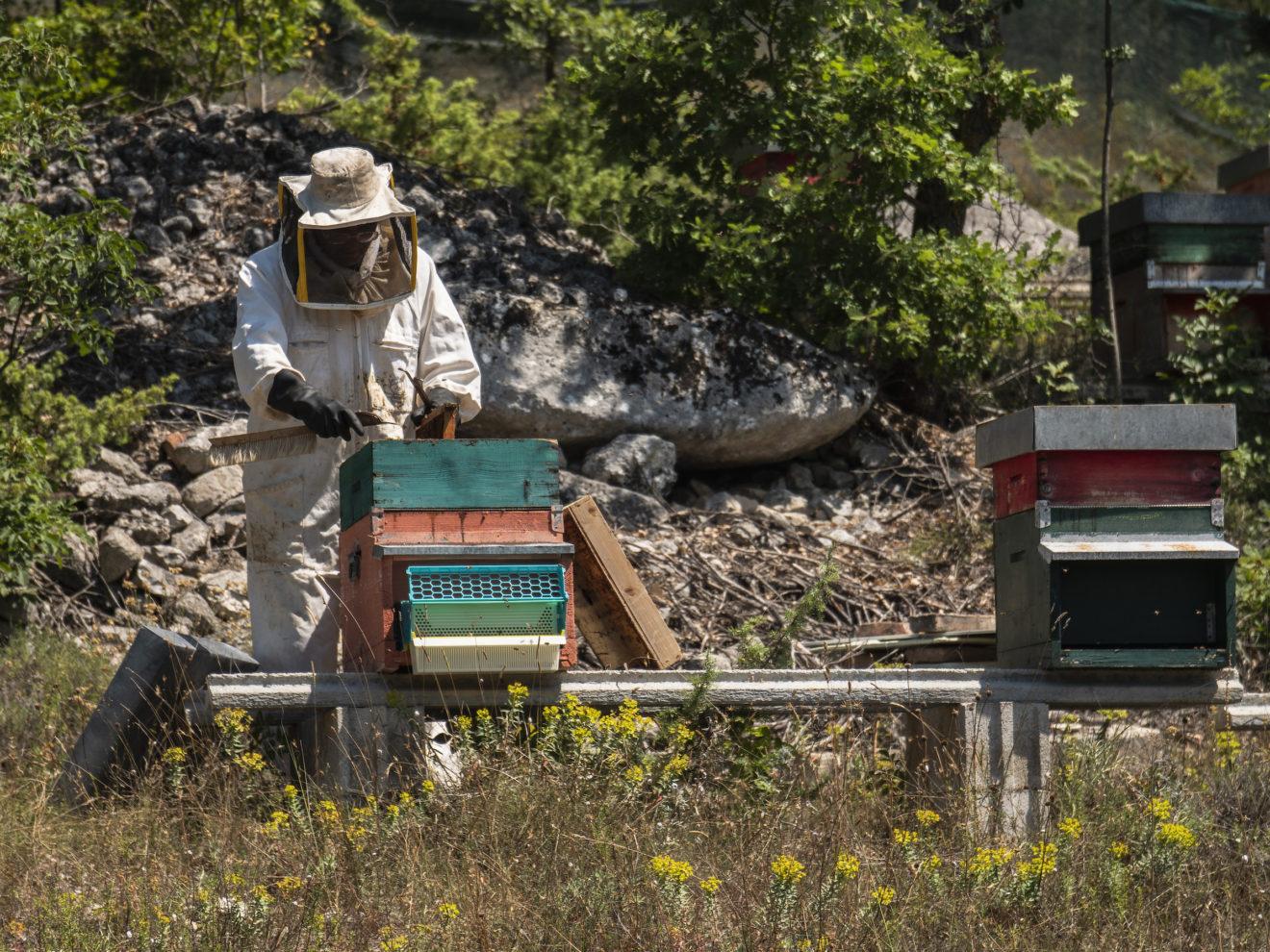 Apicoltore in un apiario