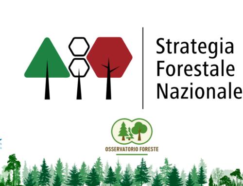 Webinar: Presentazione proposta della Strategia Forestale Nazionale